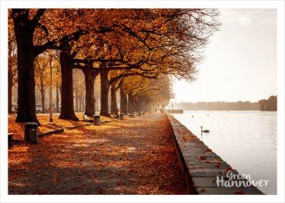 GreenHannover Postkarte Maschsee Herbst
